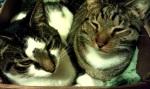 Boxed kitties