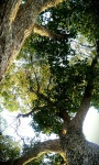 Childhood tree