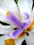 Sunset_flower2